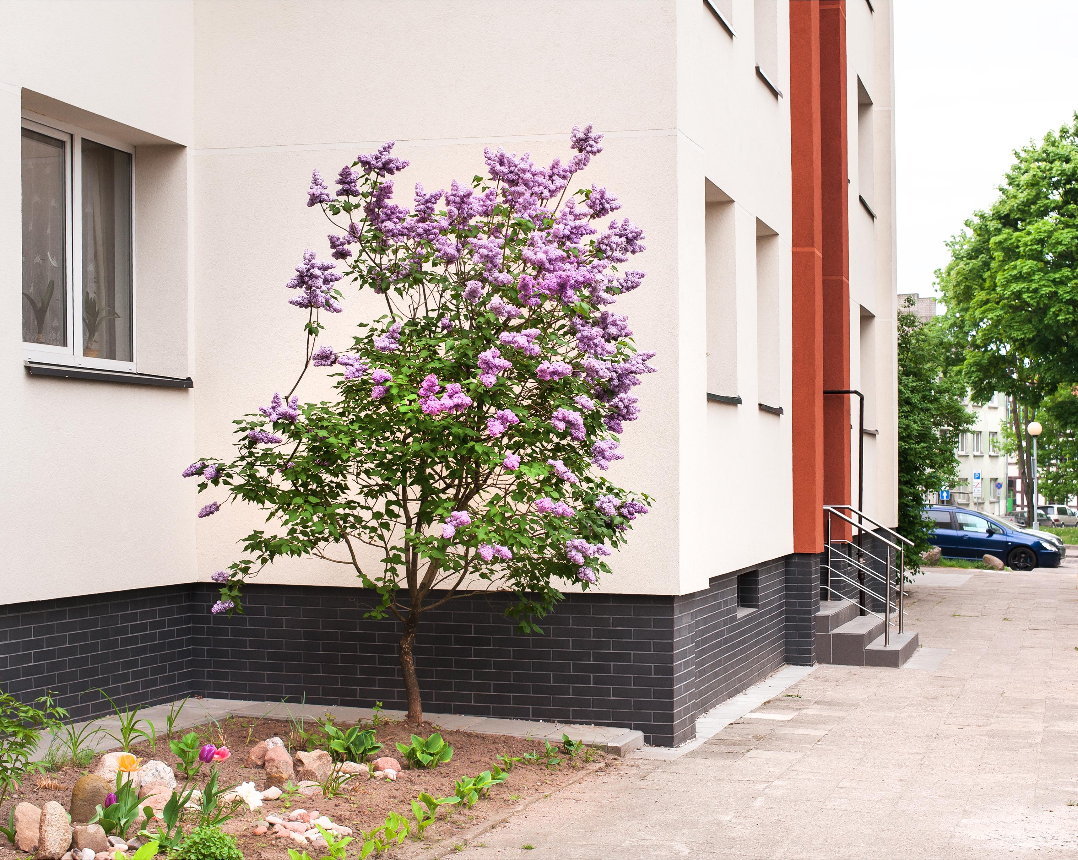 Daugiabučio gyvenamojo namo Pilies g. 1, Klaipėdoje, atnaujinimo (modernizavimo) projektas